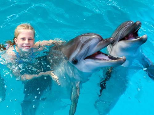swim-with-dolphin (3)